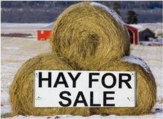What You Need To Know About Horse Hay Montana State University, University Of Connecticut, University Of Kentucky, Horse Hay, Horses, Hay For Sale, Horse Riding Tips, Best Online Courses, Online College