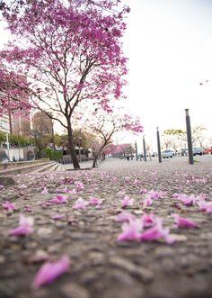 Spring blooms in Rosario, Argentina