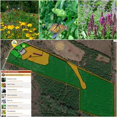 """Our map this week comes from McMinn County, Tennessee. This mapper is committed to supporting pollinators and birds. Specific areas are designated as """"pollinator gardens"""", while the 20+ species of birds are likely attracted to all the native plants, birdfeeders and birdbath. Large portions of the land are kept in meadow and forest--another attribute that likely attracts and supports a large diversity of birds."""
