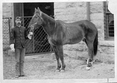 """The famous war horse """"Comanche."""" Comanche was ridden by Colonel Miles Keogh at the Battle of the Little Big Horn in late June 1876 in Montana. One of many 7th U. S. Cavalry horses to survive the battle, Comanche was very badly wounded and barely able to stand when found. He was nursed back to health and was officially retired for life with special honors, as a living relic of that terrible struggle. Comanche died at Fort Riley, Kansas in 1890."""