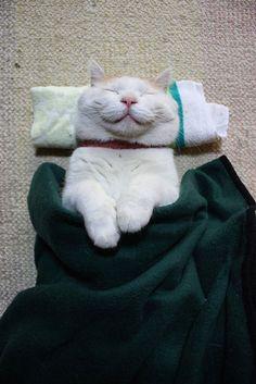25 chats heureux qui affichent un sourire béat