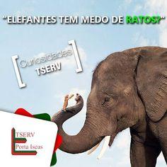 Blog do rato - Associação Brasileira de Franchising: ELEFANTE TEM MEDO DE RATO?