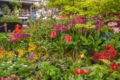 See an A-Z list of nurseries exhibiting in The Great Pavilion at RHS Chelsea Flower Show 2015