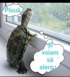 Turtle, Happy, Animals, Humor, Turtles, Animales, Animaux, Tortoise, Ser Feliz