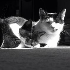 http://poeticpussycats.tumblr.com Copyright © 2014 Poetic Pussy Cats - All Rights Reserved #catsofpinterest