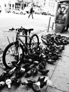 New York City (the pigeons discovered food crumbs, & word gets out fast!)