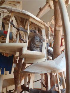 DomusfeliS - special playzones for cats - Very complex structures for cats - sculptures for cats, untreated precius wood: plum, apricot, seasoned poplar, birch, bamboo and piracanta. #catcastle #cattower #catcondo #catscratchfornitue #felinelovers #catgift #cattoy #amazingcatscratching #petdesign #catfrendyhouse #catenclosure
