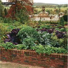 The kitchen garden at Chatsworth House. The stable block can be seen in the background. Pub Orig CL 07/04/1994
