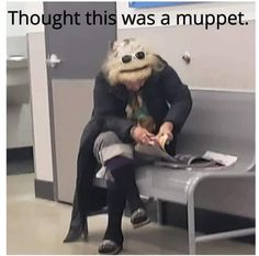 Remember the muppets? I hope so! Funny Shit, Stupid Funny Memes, Funny Relatable Memes, Haha Funny, Funny Cute, Funny Stuff, Memes Humor, Sober, Die Muppets