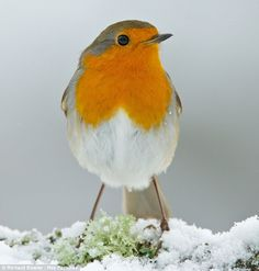 UK weather: Temperatures will hover just above zero tonight while snowfall and gales are forecast tomorrow   Mail Online