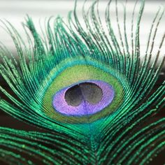 LOVE peacock feathers