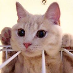 Hi sweety!💖💕💖  From @koima_too  #kittens_of_world and follow us to be featured 😸#kitty #cats #kitten #kittens #kedi #katze #แมว #猫 #ねこ #ネコ #貓 #고양이 #Кот #котэ #котик #кошка #chat #neko #gato #gatto #meow #kawaii #nature #pet #animal #instacat #instapet #mycat #catlover