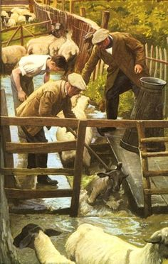 Sheep dip - world of work, the farmer...Or Rancher...reminds me how much I dislike it.