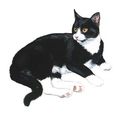 107 best linda picken cats and other animals images  cats
