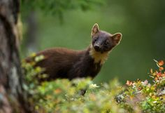 Martens by Tommy Solberg