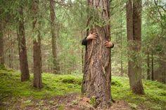 Angoisse climatique, éco-anxiété : souffrez-vous de solastalgie ? Stress, Plants, Phobias, Global Warming, Brave New World, Plant, Psychological Stress, Planets