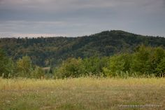 Meadows, fields and forest - typical landscape of the Carpathian Foothills.  www.simplycarpathians.com