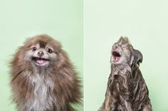 "From photographer Sophie Gamands great ""Wet Dog photography book""  - 7"