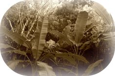 Fun Jungle Facts for Kids - Interesting Information about Jungles Rainforest Habitat, Rainforest Theme, Jungle Images, Jungle Life, Facts For Kids, Jungle Party, Interesting Information, Different Plants, Lush