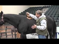 Larry Coats Proper Saddle Position -- Great video every horse owner should watch!!
