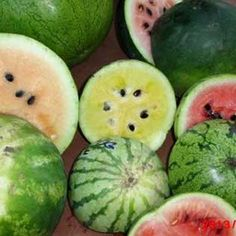 essay on watermelon in hindi