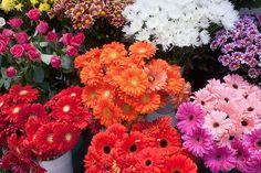 El lenguaje mágico y secreto de las flores....