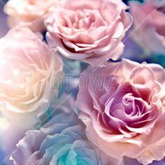 Soft Botanic - Fototapeter & Tapeter - Photowall