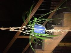 Macramé plant hanger- just now finished and I love it!