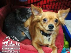 Special Kind of Love: Abandoned dog takes care of kitten it began to nurse after previous owners left them behind.