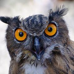 Angry Bird.  Photo by Lorenzo Tazzioli.