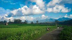 As simple as you see!  Lokasi: Persawahan ds. Kelet Keling Foto: @rezarturation  #explorekelet #pesonakeling #visitjepara #jatenggayeng #kompasnusantara