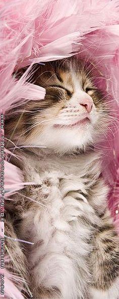 Pinky dreams :-) #photo by Kirikina on DeviantArt #cat cats kitty kitten newborn animal pet fur fluffy cute nature