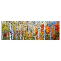 Printed on gallery-wrapped canvas, this artful design features the photographic image of an autumnal birch forest in Shinhodaka, Gifu, Japan.