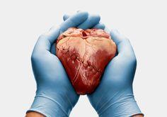 Una bióloga molecular española recibe dos millones de euros de la UE tras lograr la asombrosa recuperación de ratones con una insuficiencia cardiaca letal