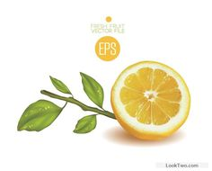 Fresh cut lemon design vector 01 free vector download