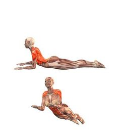 #ARDHA BHUJANGASANA Yoga Exercises and Workouts: Half-cobra pose | YOGA.com