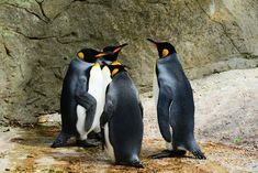 Google Penguin 4.0 - https://www.webflex-webdesign.de/google-penguin-4-0/