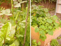 tuulinenpaiva.fi Broad beans and nasturtium.