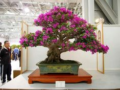 The Most Beautiful And Unique Bonsai Trees In The World-homesthetics (45) #bonsaitrees