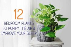 12 Bedroom Plants To Purify The Air & Improve Your Sleep - These plants purify and clean the air and create a sense of calm and relaxation. Place a few in you - Indoor Plants Clean Air, Best Indoor Plants, Jasmine Plant Indoor, Concrete Jungle, Perennial Flowering Plants, Decoration Plante, Blue And Green, Inside Plants, Health