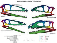 A = Proceratosaurus B = Guanlong C = Sinotyrannus D = Dilong E = Eotyrannus F = Xiongguanlong G = Yutyrannus H = Appalachiosaurus I = Bistahieversor J = Gorgosaurus K = Albertosaurus L = Daspletosa...