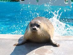 Guide to SoCal Aquariums and Marine Centers