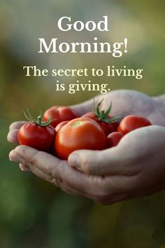 cool Good Morning Quotes: Good Morning Living is Giving, The secret of life