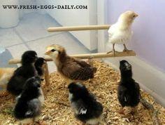 Fresh Eggs Daily: Easy DIY Chick Brooder Box Tutorial