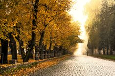 Cobblestone Road, Czech Republic photo via concrete Sigh In, Paths, Places To Go, Beautiful Places, Autumn, Fall, Country Roads, Around The Worlds, Europe