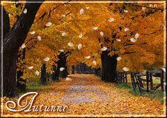 autunno - Cerca con Google