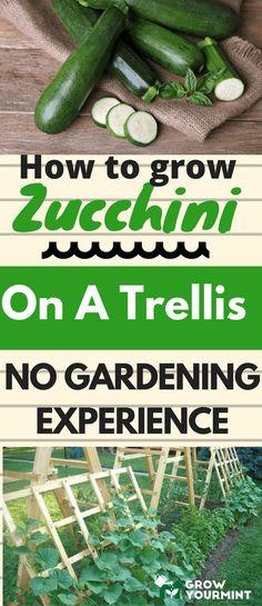 How To Grow Zucchini on A Trellis  #gardens#Zucchini#growyourmint