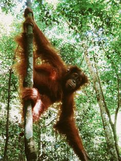 Spotting orangutans and washing elephants, Bukit Lawang is all about adventure. A perfect destination for the more adventurous among us.
