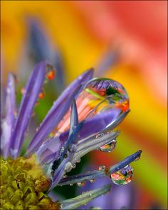 droplets(through the looking glass) by Amery Carlson. Beautiful!