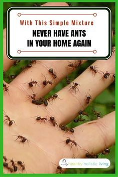 Rather than using harmful chemicals in and around your home to get rid of ants, opt to use an essential oil. This can be sprinkled in the bathroom or in the kitchen, in areas that ants frequently visit. See full article for the quick and easy recipe. #ants #nochemicals #essentialoils #healthyliving #diyhousehold